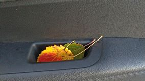 Lames d'automne rouges, jaunes et vertes Humeur d'automne images stock