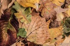 Lames d'automne sèches Photos libres de droits