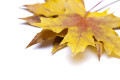 Lames d'automne sèches Photos stock