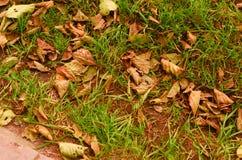 Lames d'automne sèches Photographie stock libre de droits