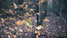 Lames d'automne sur l'arbre banque de vidéos