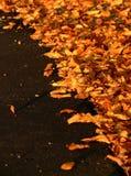 Lames d'automne sur l'asphalte noir Photographie stock libre de droits