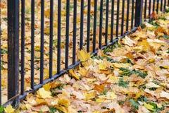 Lames d'automne sur l'herbe Photos libres de droits