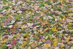 Lames d'automne sur l'herbe Photos stock