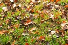 Lames d'automne sur l'herbe verte Photo stock