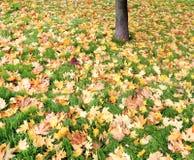 Lames d'automne sur l'herbe verte Photographie stock libre de droits