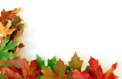 Lames d'automne sur le blanc Photo libre de droits
