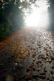 Lames d'automne sur le chemin photographie stock libre de droits