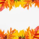 Lames d'automne sur le fond blanc Image libre de droits