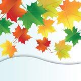 Lames d'automne sur le fond blanc Photo stock