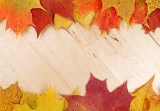 Lames d'automne sur le fond en bois Images libres de droits