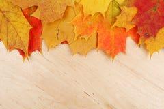 Lames d'automne sur le fond en bois Image libre de droits