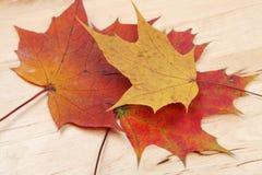 Lames d'automne sur le fond en bois Photographie stock