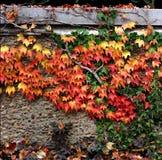 Lames d'automne sur le mur Image libre de droits