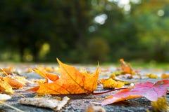 Lames d'automne sur le trottoir Images libres de droits