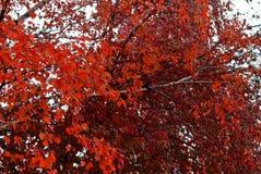Lames d'automne sur les arbres Photographie stock libre de droits