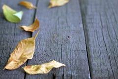 Lames d'automne sur les panneaux en bois Photo libre de droits