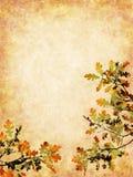 Lames d'automne texturisées Images libres de droits