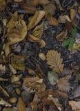Lames d'automne tombées image stock
