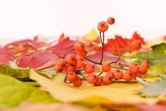 Lames d'automne tombées Photographie stock