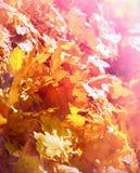 Lames d'automne tombées Image libre de droits