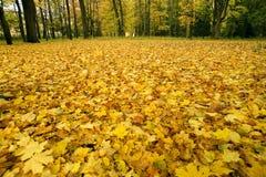 Lames d'automne tombées photo libre de droits