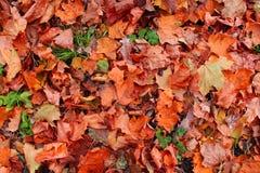 Lames d'automne tombées Photos libres de droits