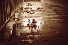 Lames d'automne tombées au sol Photographie stock libre de droits
