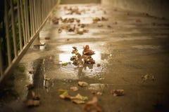 Lames d'automne tombées au sol Photos libres de droits