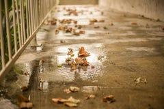 Lames d'automne tombées au sol Image libre de droits