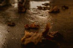 Lames d'automne tombées au sol Photographie stock