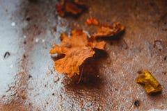 Lames d'automne tombées au sol Photo libre de droits