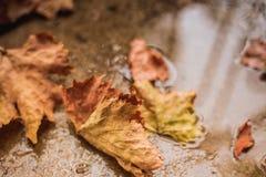 Lames d'automne tombées au sol Photos stock
