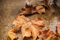 Lames d'automne tombées au sol Images libres de droits