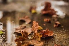 Lames d'automne tombées au sol Image stock