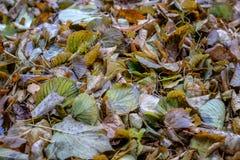 Lames d'automne tombées au sol photo stock