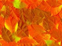 Lames d'or d'automne. Image libre de droits