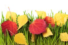 2008 lames d'or de lame de plantation d'automne sec d'automne d'air près de chêne octobre Russie tourne qui enroulent le jaune Photo stock