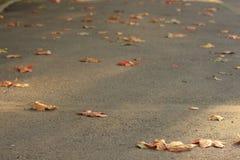 2008 lames d'or de lame de plantation d'automne sec d'automne d'air près de chêne octobre Russie tourne qui enroulent le jaune Photographie stock