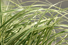 Lames d'herbe Photos stock