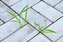Lames d'herbe Photo stock