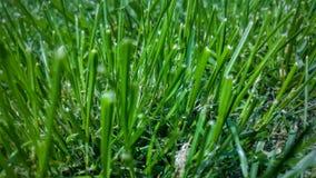Lames d'herbe Photo libre de droits