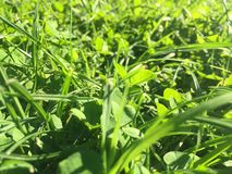 Lames d'herbe Photographie stock