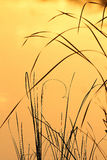 Lames d'herbe au lever de soleil Photographie stock libre de droits