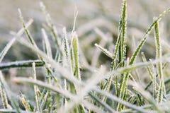 Lames d'herbe avec le givre 2 Photos stock