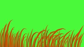 Lames d'herbe, balançant dans le vent, fond d'écran vert, animation 3d illustration stock