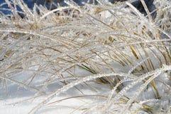 Lames d'herbe brillantes en Frost Photos stock