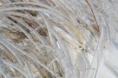 Lames d'herbe brillantes en Frost Image stock
