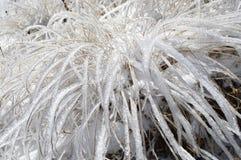 Lames d'herbe brillantes en Frost Images libres de droits