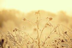 Lames d'herbe couvertes de gelée au soleil Fond naturel saisonnier de bel hiver images stock
